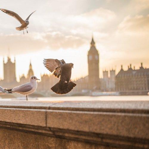 London Legal English