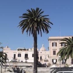 Bari_Italy_-_panoramio_18.jpg